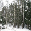 Район деревни Сальково СНТ «Поречье» Лесной участок 24.2 сотки. - Фото 4
