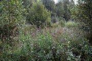 Продается участок у края леса в д. Сергеиково - Фото 5