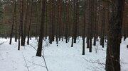 Лесной участок в престижном пригороде г. Калуги. - Фото 2