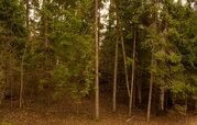 Земельный участок в лесу, 15 соток, 1,45 млн. рублей, Дмитровка - Фото 3