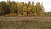 Участок у леса - Фото 2