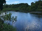 Участок на берегу Протвы-реки, 30 соток, Можайский р-он Минское ш. - Фото 5