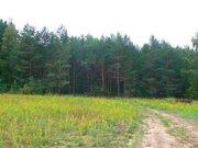 Участок в сосновом бору в д.Нутрома Тверская обл. г.Кимры