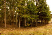 Земельный участок в лесу, 15 соток, 1,45 млн. рублей, Дмитровка - Фото 1