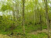 Земельный участок в лесу, 10 соток, Киевское ш, 55 км, Лесная радуга - Фото 4