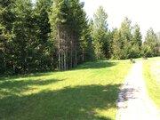 Земельный участок в лесу, 20 соток, Киевское ш, - Фото 1