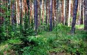 15 соток (лпх) в с.Городец, рядом лес, недалеко озера и р. Ока - Фото 2
