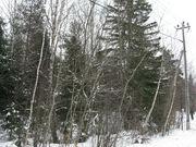 Район деревни Сальково СНТ «Поречье» Лесной участок 24.2 сотки. - Фото 3