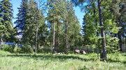 Продажа участка, Репино, м. Комендантский проспект, Ул. Кленовая - Фото 5