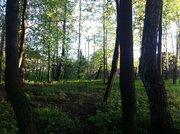 Участок 8 сот в Чеховском районе , с. Талеж, с лесными деревьями. - Фото 4