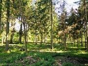 Лесной участок в Кобяково, СНТ Топаз, 22 сотки - Фото 1