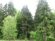 Лесной участок в стародачном месте - Фото 2
