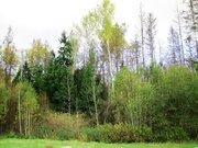 Участок 10 соток с баней в районе Зеленой рощи. 33 от МКАД - Фото 3