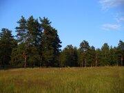 Продается прекрасный лесной участок с соснами под ИЖС в р-не Петушков - Фото 1