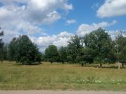 Продаются участкис лесными деревьями в д. Прохорово Чеховского района. - Фото 1