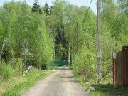 Прекрасный земельный участок в хвойном лесу, Можайское - Минское ш. - Фото 2