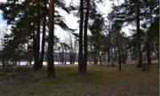 Лесной земельный участок на высоком берегу реки Ока деревня Лужки - Фото 4