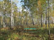 Участок 20 соток с лесом в п.Минино - Фото 2