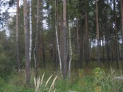 Лесной уч-к 20 сот. в п.Ильинский, сосны, ПМЖ, ИЖС, тихое место, асфал - Фото 3