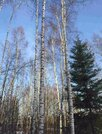 Земельный участок 25 соток на берегу реки Хотча - Фото 2