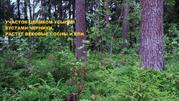 25 соток ИЖС соснового леса в пос. Судаково, Приозерский район. - Фото 5