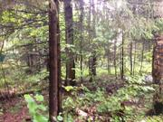 Продается участок 15 соток, п.Трудовая, 27 км. от МКАД - Фото 2
