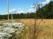 Хороший участок- лес , озеро, дороги, электричество - Фото 3