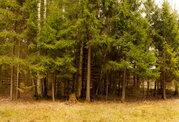 Земельный участок в лесу, 15 соток, 1,45 млн. рублей, Дмитровка - Фото 5