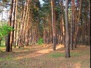 Участок 1 га, в сосновом лесу, Одинцовский район, 26 км от МКАД - Фото 2