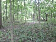 Участок в лесу - Фото 5