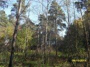 Участок с лесными деревьями в старо-дачном месте, крайний к лесу - Фото 5