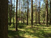 Лесной участок 12 соток ИЖС - Фото 3