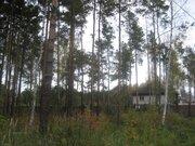 Лесной уч-к 20 сот. в п.Ильинский, сосны, ПМЖ, ИЖС, тихое место, асфал - Фото 5