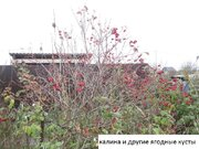 Продам участок с плодоносящим садом 50 км. от МКАД по Ярослав шоссе - Фото 4