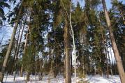 Участок 12 соток с лесными деревьями в Жаворонках - Фото 2