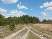 Земельный участок 60 сот на берегу реки Медведица д. Молоди - Фото 3