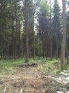 Лесной Земельный участок 10 сот по Рогачевскому шоссе, дер Поповка - Фото 2