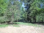 Лесной участок 10 соток в истринском районе - Фото 4
