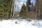 Лесной участок в отличном месте - Фото 4