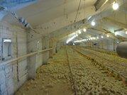 Продается Птицефабрика - производство мяса цыпленка бройлера - Фото 1