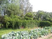 Продается красивый уч. земли в Щелковском р. со всеми коммунникациями - Фото 3