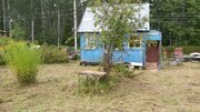 Участок в сосновом лесу с небольшим домиком 50 км от МКАД - Фото 5