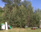 #649. Коттеджный поселок Медведица. Участок 30 соток на 2-й линии - Фото 5