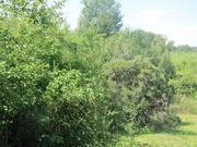 Продаю дачу у деревни Рогово рядом с пгт Пущино - Фото 2