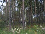 Лесной уч-к 40 сот. в п.Ильинский, вековые сосны, ПМЖ, ИЖС, асфальт, л - Фото 2