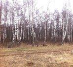 Участок 25 соток ИЖС с лесными деревьями д. Крюково - Фото 3