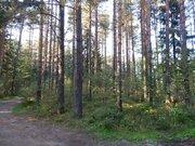 Садовый участок, ш. Горьковское, 55 км, дер.Дальняя - Фото 5