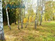 Продается березовая роща 35 кв. метров в жуковском районе - Фото 1
