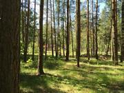 Лесной участок 20 соток д. Копнино ИЖС - Фото 3