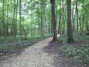 Участок в лесу - Фото 4